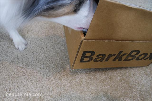 Thanksgiving, BarkBox, Border Collie, Dog Toys & Dog treats