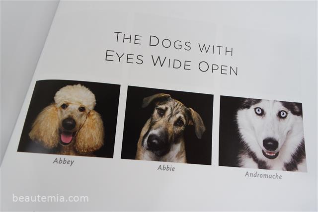 Zen Dogs by Alexandra Cearns, dog training & cute puppies