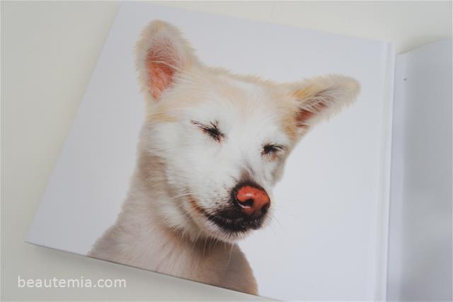 Zen dogs, cute & funny dogs
