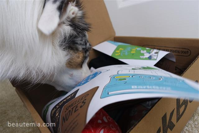 BarkBox, border collie, dog toys & dog treats