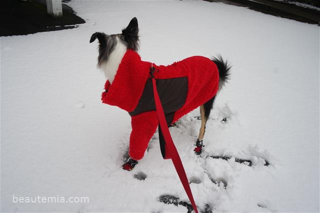 Wagwear dog jacket, coat & border collies