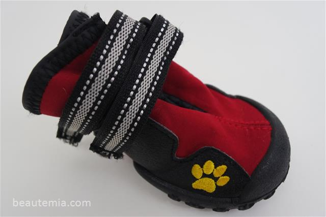border collies & dog shoes