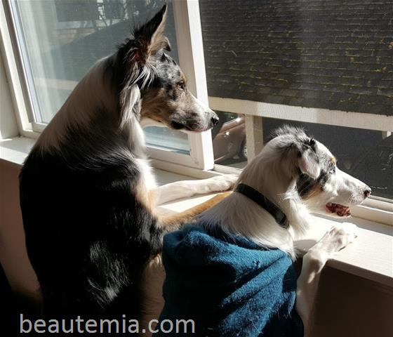 border collies, cute dogs & dog allergy